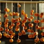 吊ったばかりの干し柿